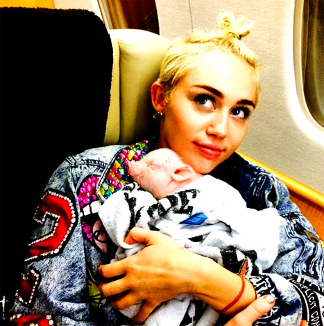 1407752472_miley-pig-article