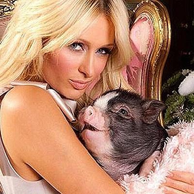 20150720-pigs-4