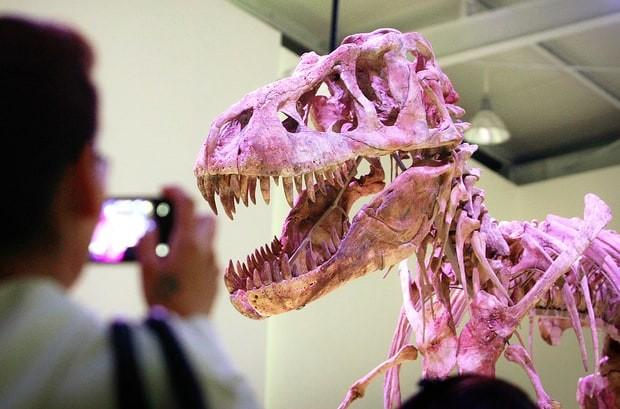 Tarbosaurus bataar 70 миллионов лет от роду