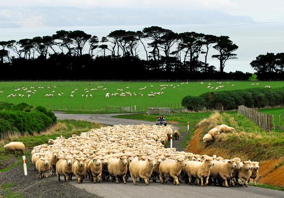 rs_560x391-140408195839-1024.Wharekauhau-Lodge-New-Zealand.4.ms.040814_copy