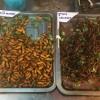Лена Ленина лакомится насекомыми