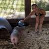 Майли Сайрус надела бикини в хлев к свиньям