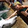 «Капитана Марвел» Бри Ларсон осудили за фото с дельфином 12-летней давности