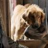Премьеру фильма «Собачья жизнь» отменили из-за протестов зоозащитников
