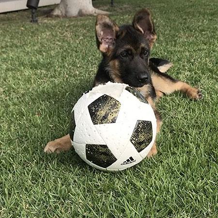 20170116-dog-2