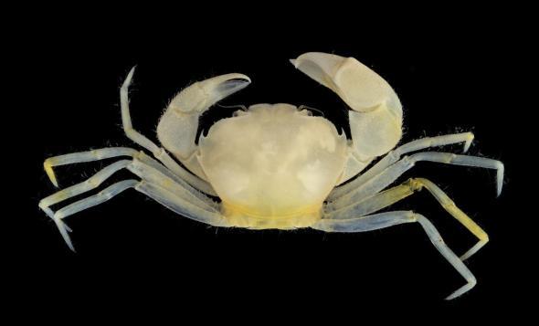 harry-potter-crab-01.adapt.590.1